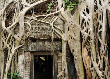 "Ta Prohm, or ""The Jungle Temple,"" famous as the set of the film ""Tomb Raider,"" has been left mostly as it was found, with trees growing in and around the temple walls"